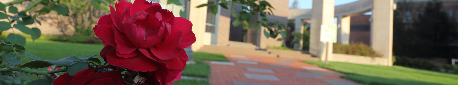 A rose blooming in UNI's Memorial Garden